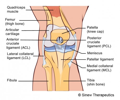 Knee Injuries: Medial Knee Injuries