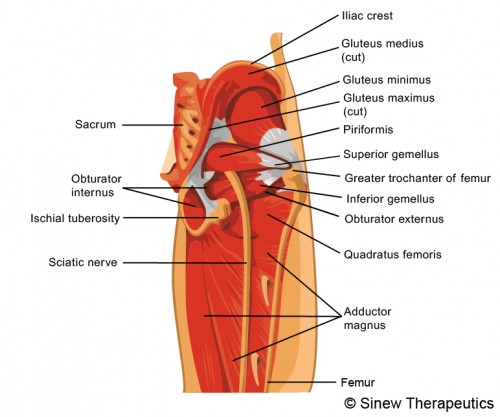 Buttock Injuries Information - Sinew Therapeutics
