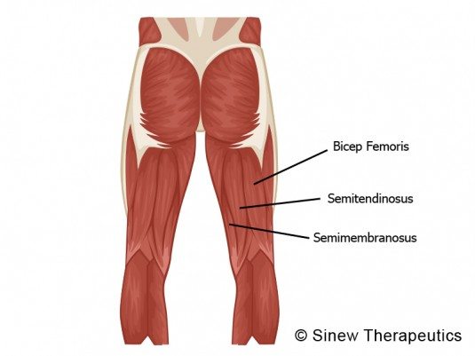 Tight Hamstrings Information - Sinew Therapeutics