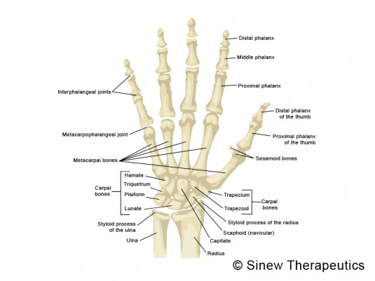 Finger Sprained Jammed Information - Sinew Therapeutics